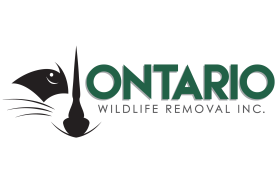 Ontario Wildlife Removal